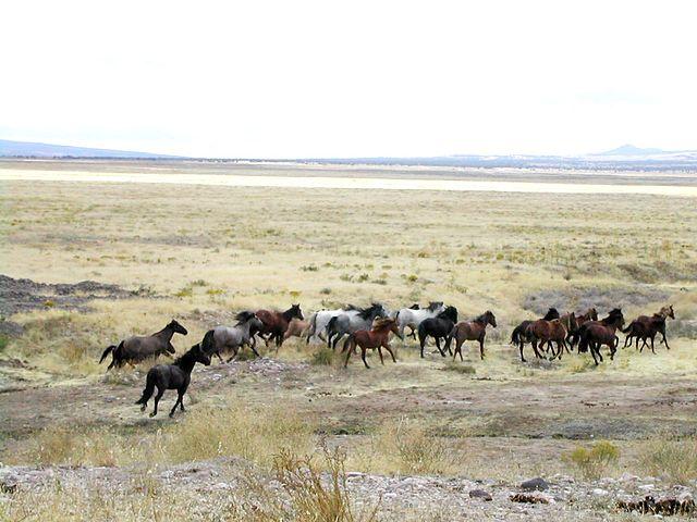 Mustang_Utah_2005_2
