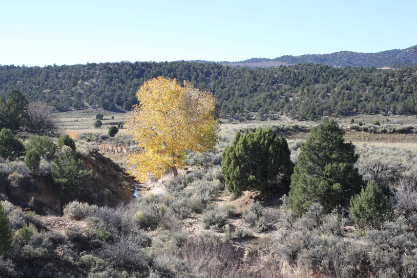 Sharon St Joan wild lands south of Bryce, in the path of the expanding coal mine..JPG